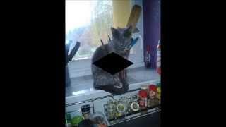 Association Eden cat's