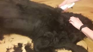 видео Цены на стрижку собак и кошек