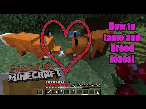 how-tame-a-fox-in-minecraft-survival-!!|minecraft-#5