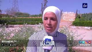 العثور على ثمرة فجل ضخمة في عمّان تزن 9 كغم - (20-3-2018)