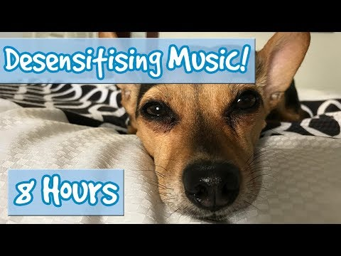 DOG DESENSITISATION! Music with Sound Effects to Desensitise Dogs to Noises and Reduce Anxiety! 🐶💤