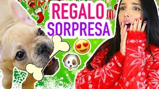 THE BEST SURPRISE!!! 🎁 NEW MEMBER OF THE FAMILY 🐶 *YOU WON'T BELIEVE IT* | Mariale