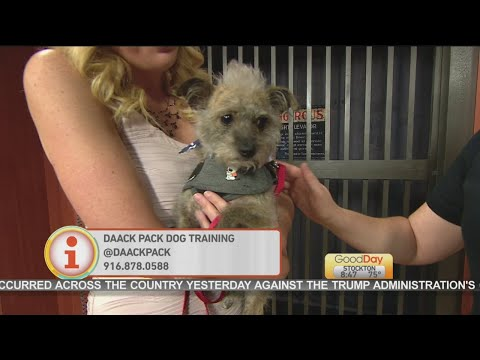 Good Day Sac - managing 4th of July with your pet