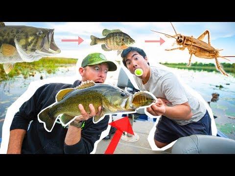 FOOD CHAIN Fishing CHALLENGE! ( BIG FISH Surprise )