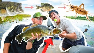 FOOD CHAIN Fishing CHALLENGE! ( BIG FISH Surprise )