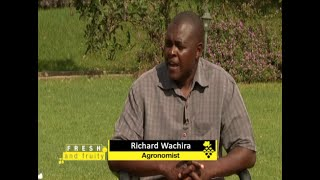 """""""Passion Fruit farming in Kenya is very profitable"""" - Expert Guide part 1"""