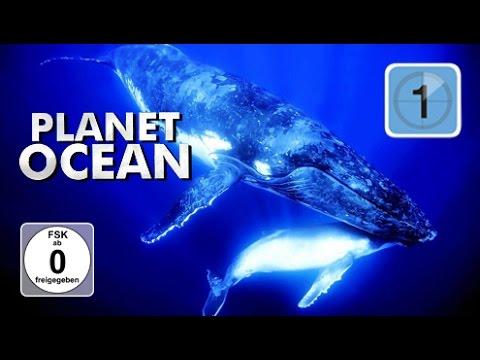 Planet Ocean 2 – Giganten der Weltmeere – Ein Meer der Fruchtbarkeit (Dokumentation)