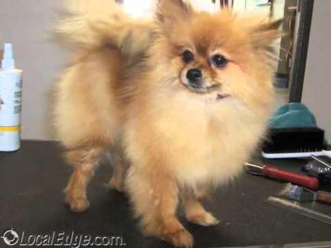 Doggie doos dog grooming jacksonville fl youtube doggie doos dog grooming jacksonville fl solutioingenieria Choice Image