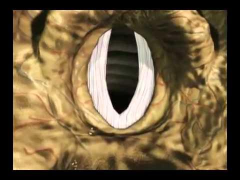 Animazione Corde Vocali 2/2 - Ars Music