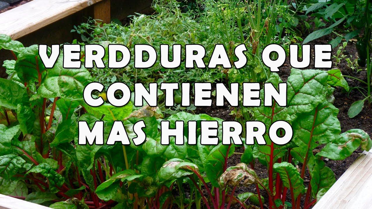 Verduras que Contienen Más Hierro - Lista de Verduras ...