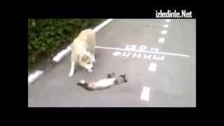 ölü numarası yapan kedi