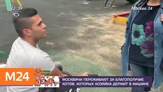 Жительница Перова сделала из автомобиля кошачий приют - Москва 24