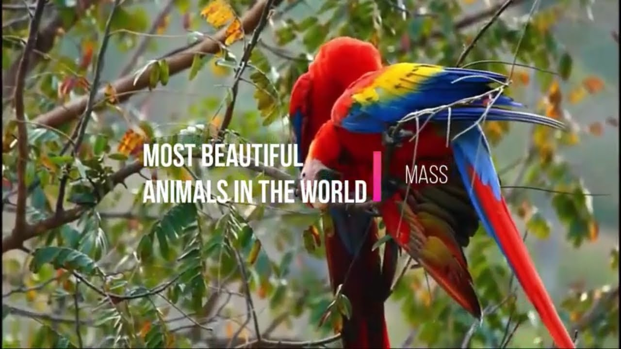 Most Beautiful Animals In The World Video 2019 Youtube
