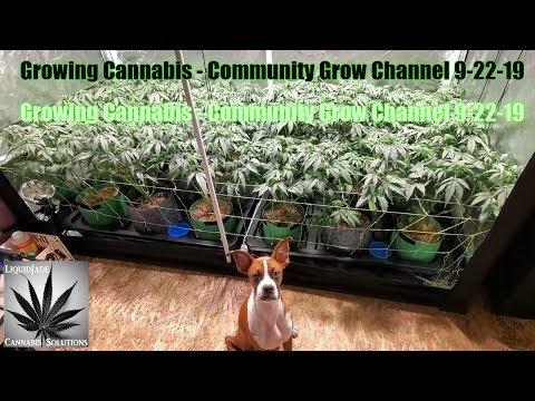 Growing Cannabis - Community Grow Channel 9-22-19