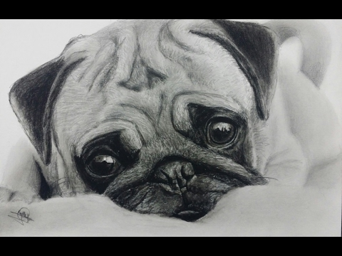 drawing an adorable pug dibujando un perrito speed drawing