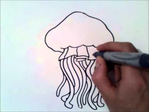 How To Draw A Jellyfish | How To Draw A Jellyfish Step By Step