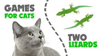 CAT GAMES ★ hunt TWO LIZARDS on screen
