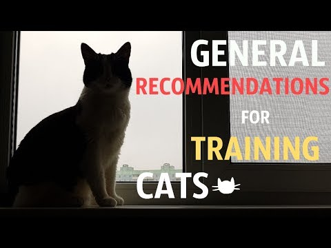 General RECOMMENDATIONS for TRAINING cats