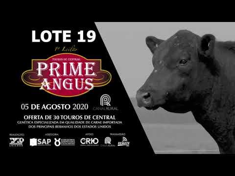 LOTE 19   BLACK OPAL TE914  DON JULIO Prod  Agência El Campo