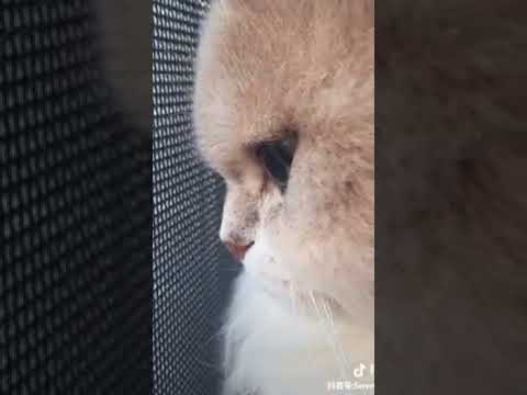 Cat Series: When my cat is being rejected