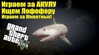 GTA 5 - Играем за Опасную АКУЛУ [Играем за Животных и Ищем Лофофоры]