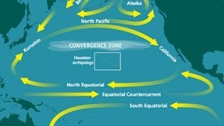 ☢ Fukushima fallout should the West Coast be concerned ☢