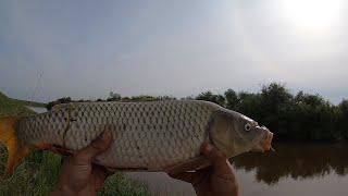 Рыбалка в СИБИРИ на ФИДЕР или как поймать ДИКОГО СИБИРСКОГО САЗАНА...
