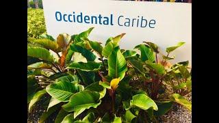 OCCIDENTAL CARIBE 4*, PUNTA CANA, DOMINICAN REPUBLIC