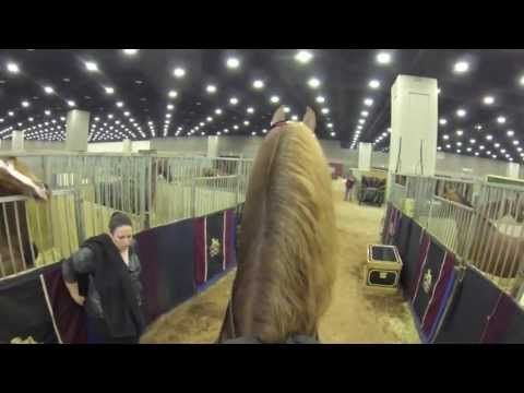 """Stake Night World's Championship Horse Show 2013 Five-Gaited Stake """"Video Cam Perspective"""""""