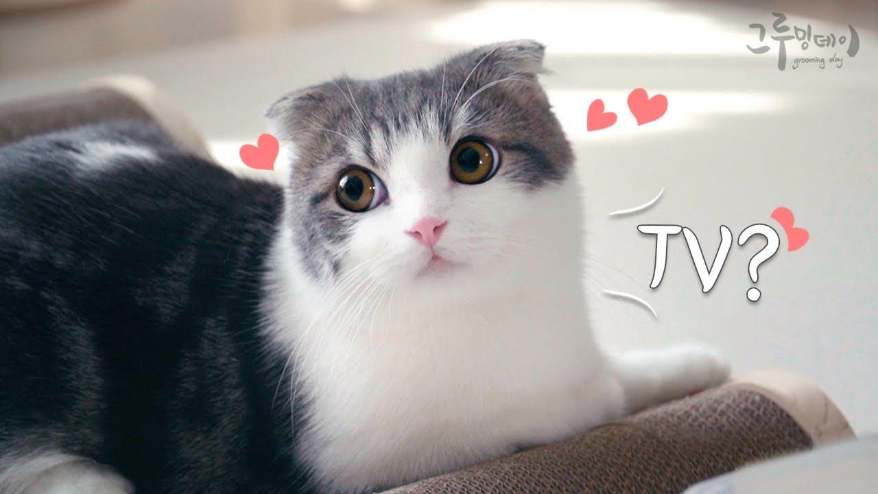 고양이 코비 베리가 TV에 나왔어요