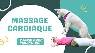 Apprendre au chien à faire le massage cardiaque  Tricks dog dancing