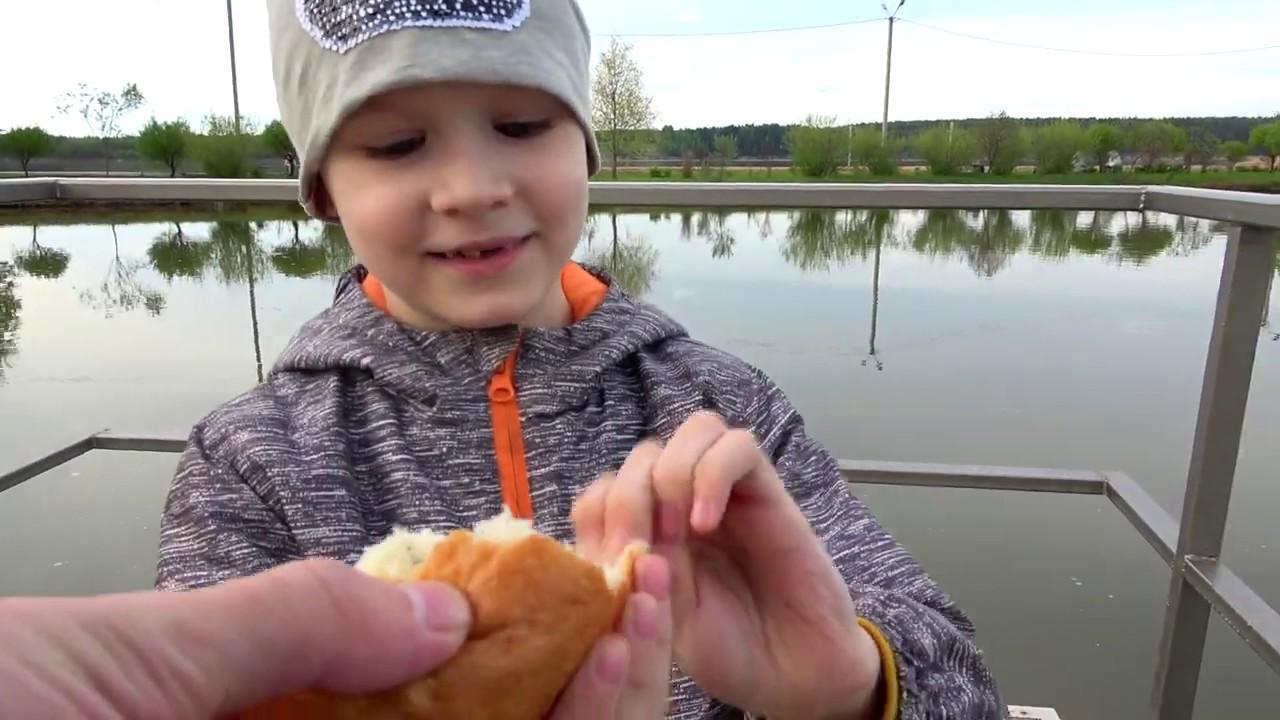 Влог. Макс кормит рыб. Развлечения для детей.