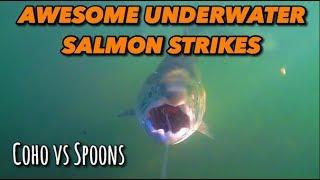 Awesome Underwater Salmon Strikes (Coho vs. Spoons)