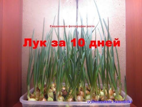 Кактус — растение. Описание кактуса с картинками