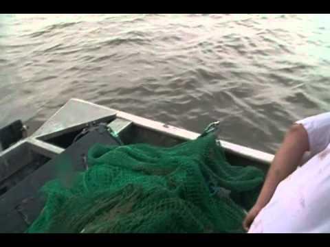 shrimping in mobile bay 003.MP4