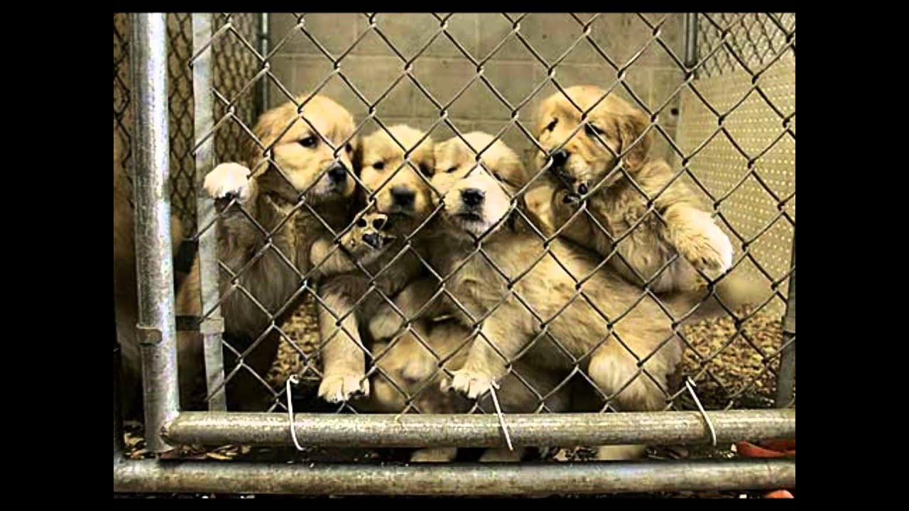 What is pet overpopulation