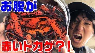 【衝撃】川に網を突っ込んだら大量に「謎の生物」が捕れた thumbnail