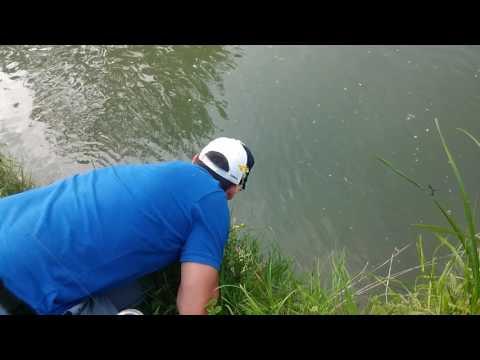 Sandre au canal de l'ourcq.