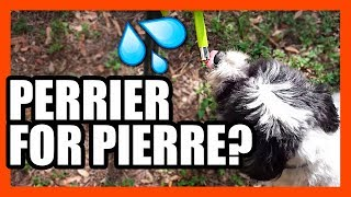No-Drip Pet Drinking Nozzle Review | EpicReviewGuys