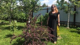 Моя любимая дача 28 мая 2019 г. Новые посадки. Новые елки. Петунии. Обзор майского сада.