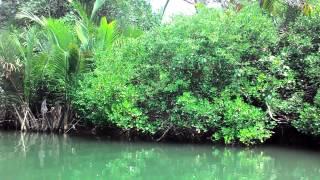 Peucang island#sungai d pulau handelem#anacconda