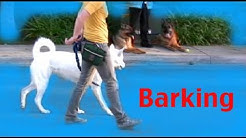Stop barking on a walk - Barking- Episode 3