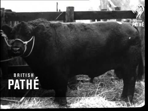 Sale Of Angus Herd Dublin Issue (1942)