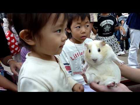犬をいじめる子供 -1歳7カ月の子供が室内犬《キャバリア》をいじめます- その他(教育・科学・学問) | 教えて!goo