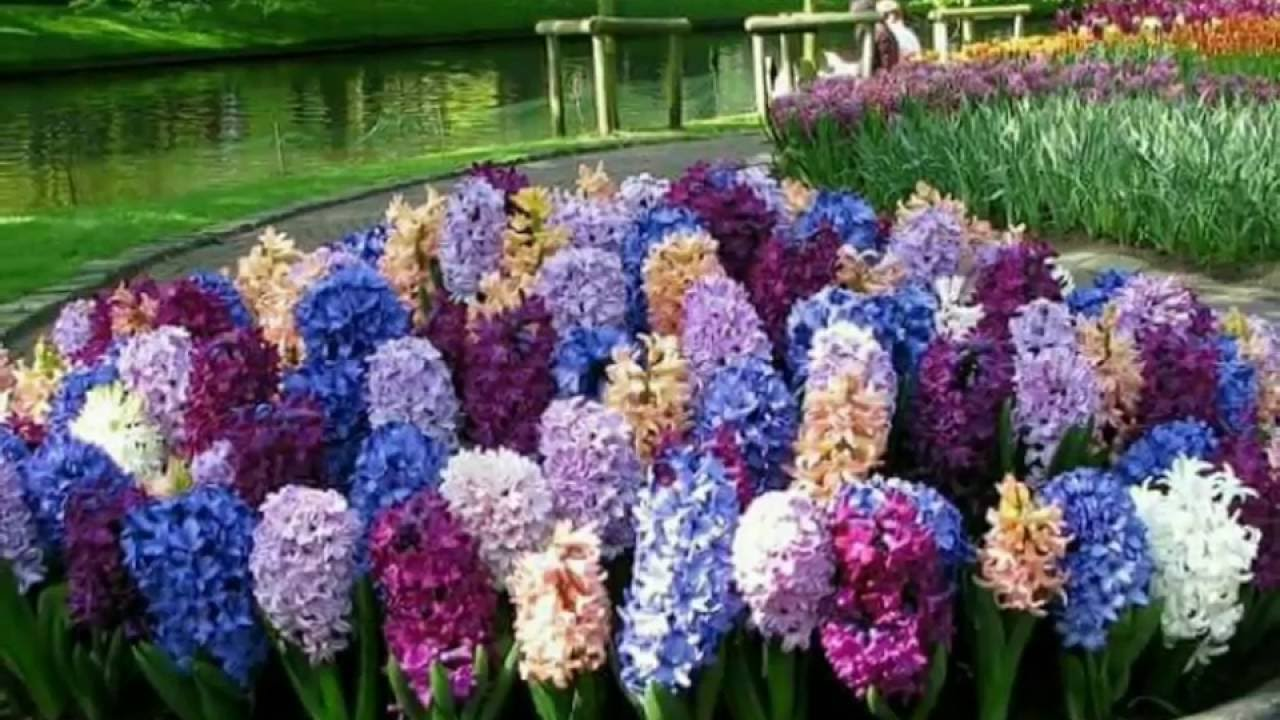Most beautiful flower gardens in the world most for Beautiful garden pictures of the world