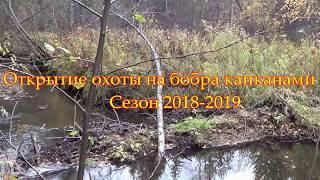 Установка и проверка капканов на бобра 2018.(Охота на бобра капканами) Beaver hunt trapped.