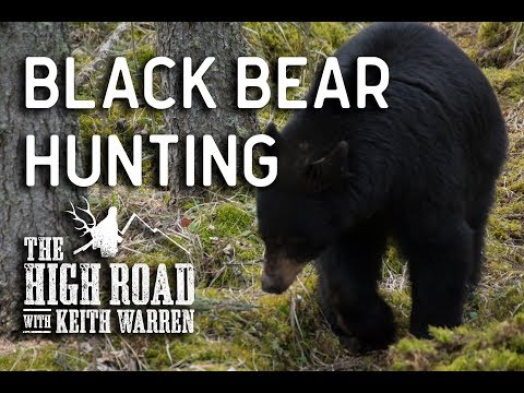 Black Bear Hunt Extravaganza | The High Road