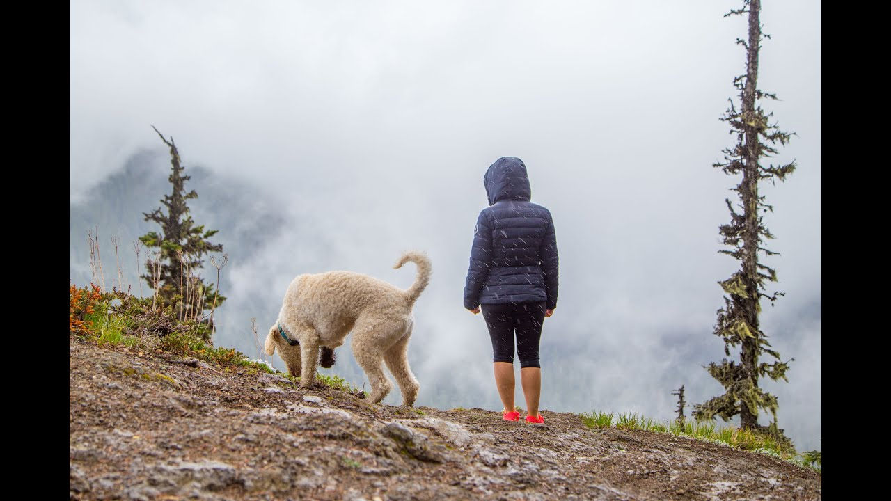 Hiking with Charlie the Labradoodle - High Rock Lookout