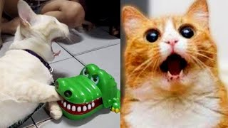 Funny dog and cat - Funniest Dogs videos - Funny Cats compilation #3