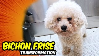 BICHON FRISE GROOMING Transformation  | Pet | Dog Grooming | The Dog
